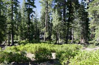 8601 Lloyd Tevis  (.7 Acre Lot) – Lahontan